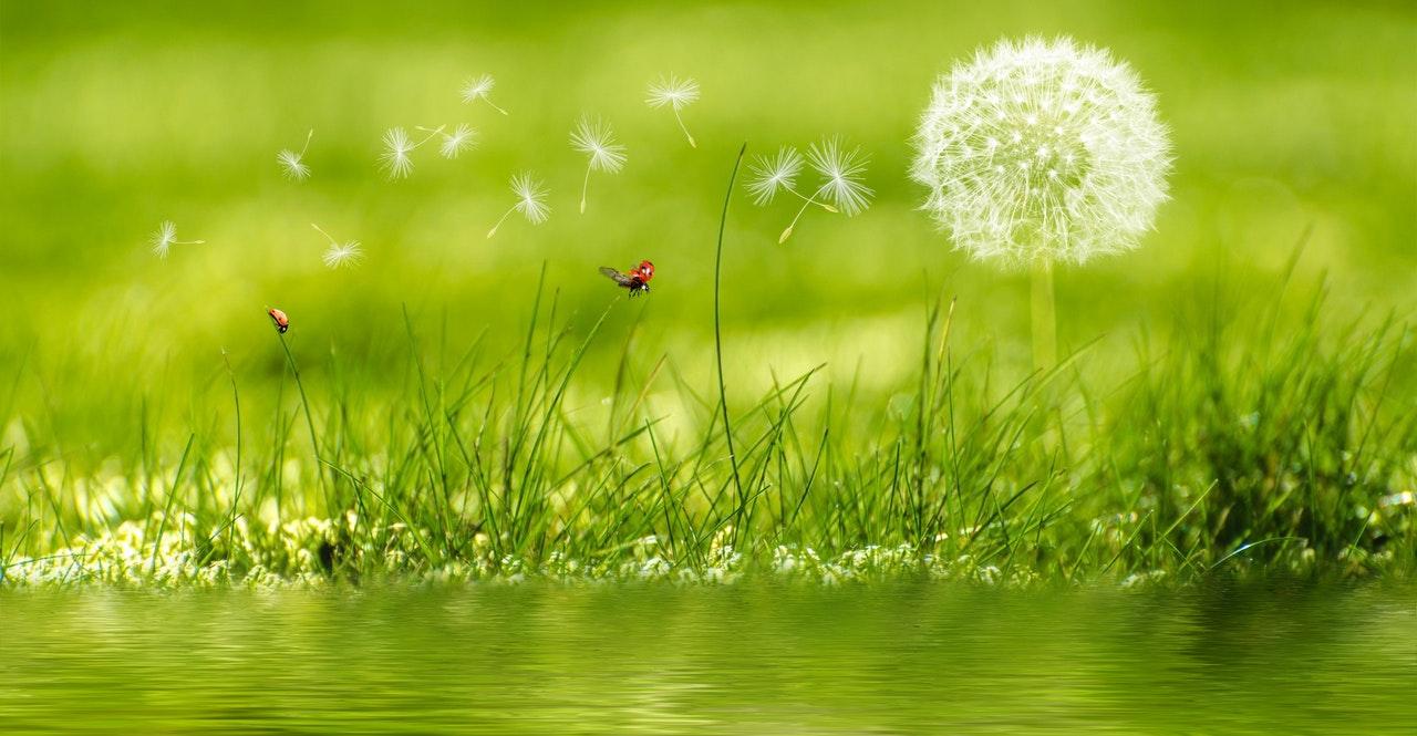polenes